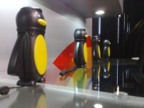 Easter Island penguins